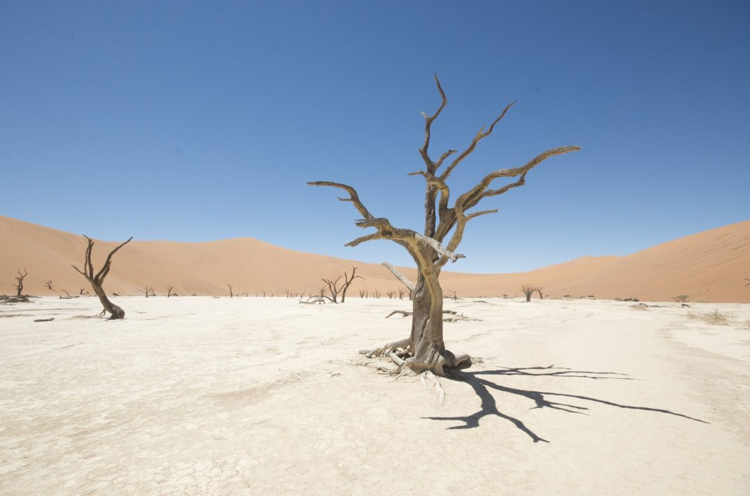 Watch ancient trees in Deadvlei - Humbling things to do in Namibia