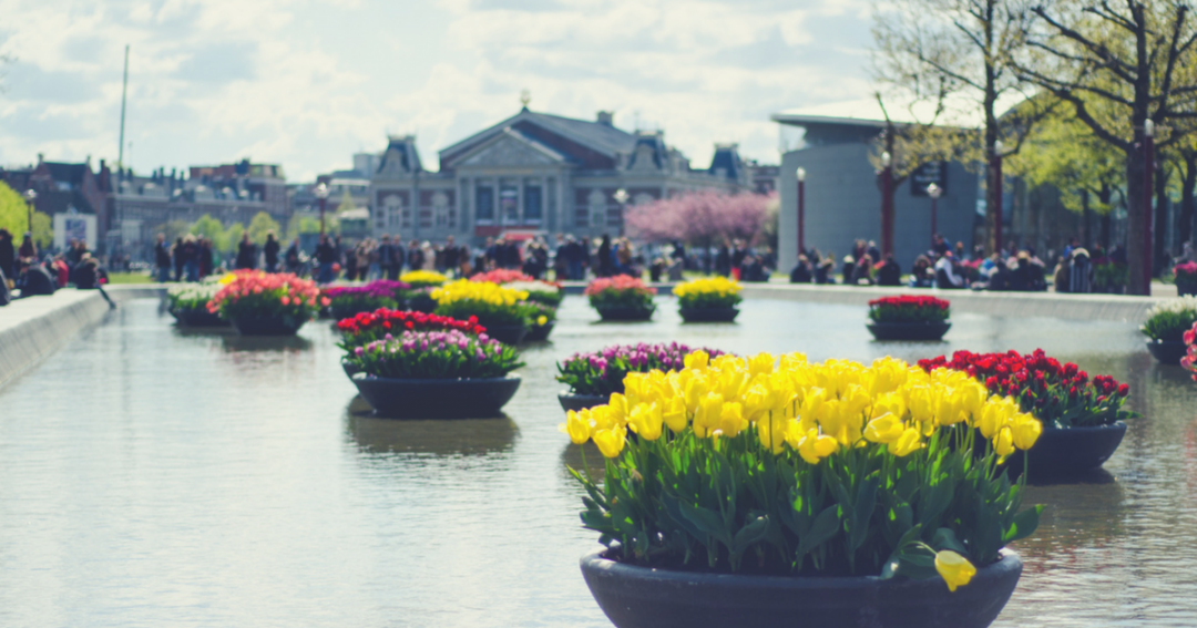 7 Essential Dutch words to use while traveling the Netherlands
